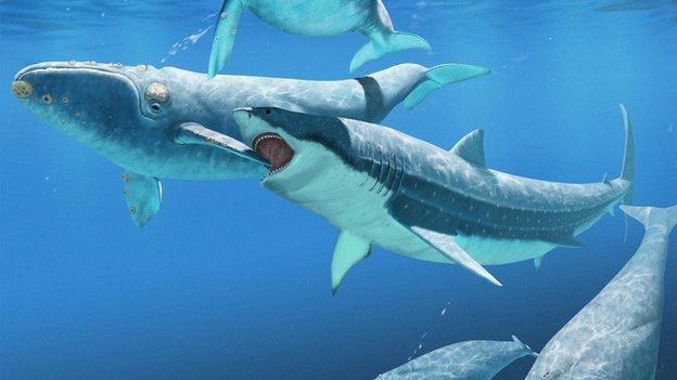 The extinction of the biggest shark known to science may have triggered whales to grow to their current hefty sizes, a study suggests.