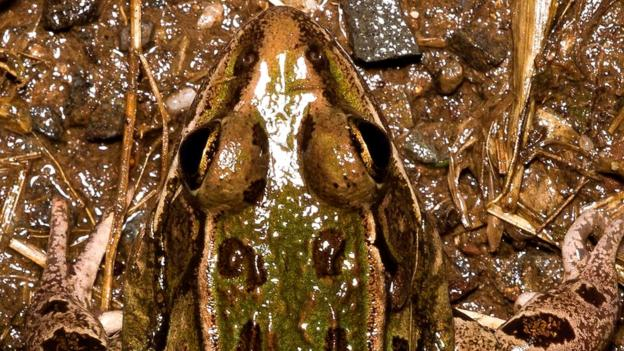 Scientists confirm that a frog found living in New York City wetlands is a new species.