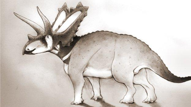 A new species of horned dinosaur is identified from fossils held in a Canadian museum for 75 years.