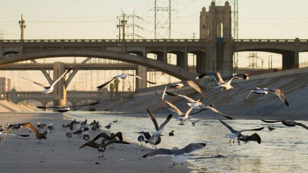 Any moves to modify the concrete Los Angeles River, to return parts of it to a more natural setting or to capture water, must not compromise its flood-protection function, say scientists.