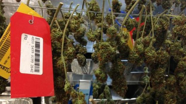 Nebraska and Oklahoma are asking the US Supreme Court to nullify a 2012 law that made marijuana legal in the US state of Colorado.