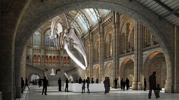 London's Natural History Museum is re-modelling its entrance, moving out the famous Diplodocus skeleton and moving in the bones of a blue whale.