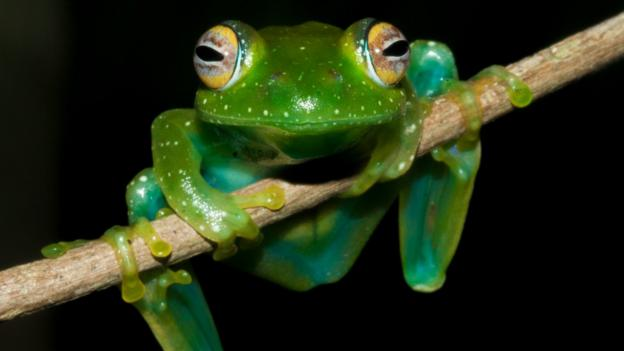 A devastating disease that has wiped out amphibians around the world has been discovered in Madagascar, scientists report.