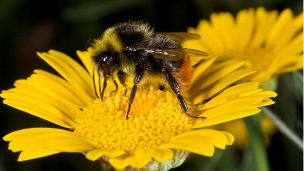 Wild bumblebees are infected with many of the diseases found in honeybees looked after by bee keepers, according to a national survey.