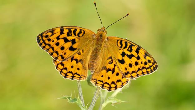 The warm weather of 2014 boosted the number of some butterflies, including one of the UK's rarest species, the High Brown Fritillary, a survey has found.