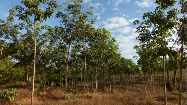 The global demand for rubber tyres is threatening protected forests in Southeast Asia, according to a study.