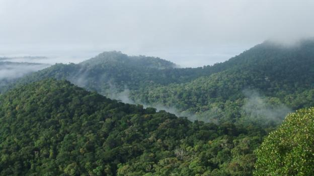 About 1% of all the tree species in the Amazon rainforest account for half of the carbon locked in the region, a study estimates.