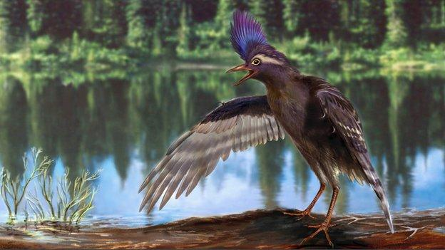 Scientists in China report a new fossil species: the oldest member yet of the evolutionary branch that produced modern birds.