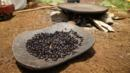 coffee, Kafa, Ethiopia (Credit: Credit: Thomas Lewton)