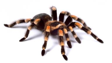 Spider >> Bbc Earth The Newly Discovered Spider With Ninja Dance Moves