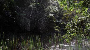 The web looks like it was spun by a giant spider (Credit Matjaž Gregori? & BBC - Earth - The worldu0027s largest spider is the size of a dinner plate
