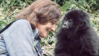 Fossey called many of the gorillas her friends (Credit: Ian Redmond)