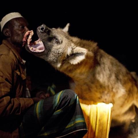 Yusef has a close relationship with wild hyenas (Credit: Fredi Devas / BBC NHU 2016)