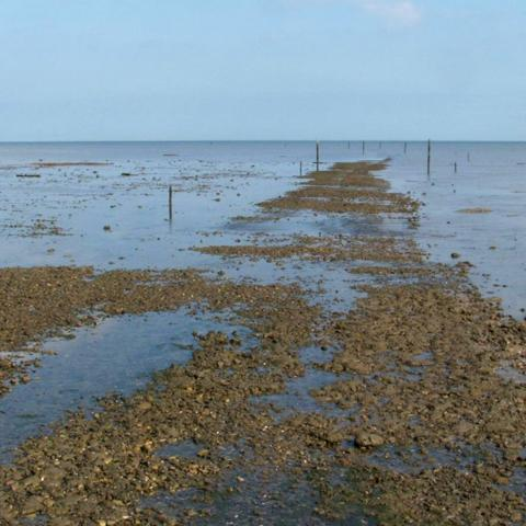 The Broomway is a path, but one that the tide sweeps clean twice a day