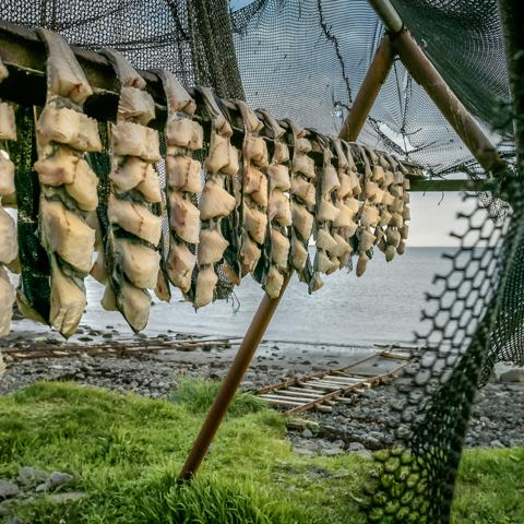 Iceland, fish (Credit: Credit: Arctic-Images/Getty Images)