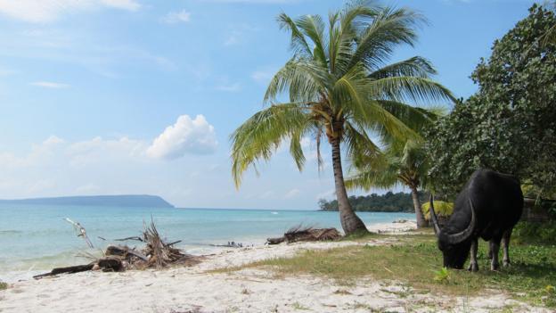 Lppchea endangered paradise