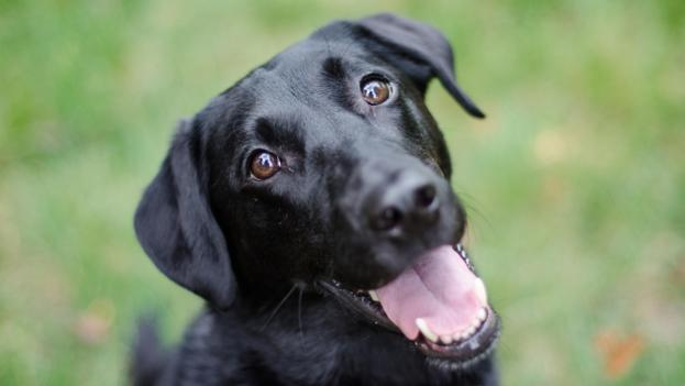 How a dog's mind can easily be controlled