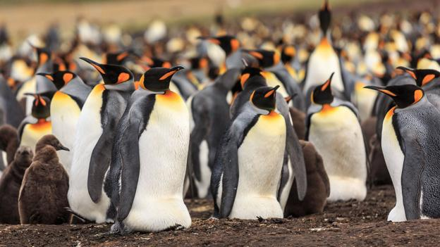 An introduction to the mysterious life of penguins