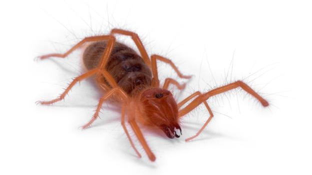 Sun scorpion