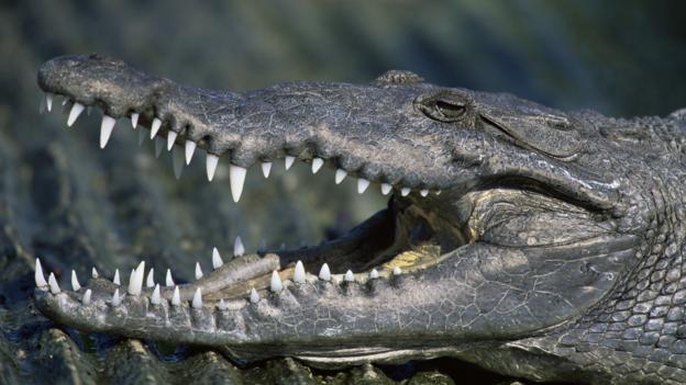Bbc Earth Why Do Crocodiles Attack Humans