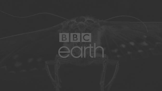 BBC - Earth - Home