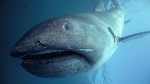 the epic history of sharks