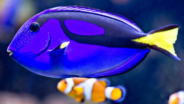 earth story finding real life dory