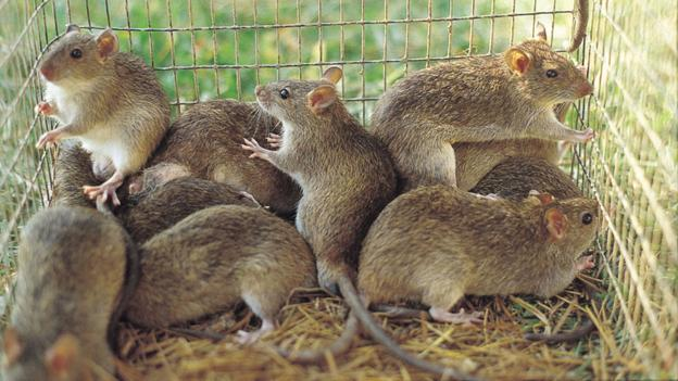 What Food Do Mice Eats To Catch It