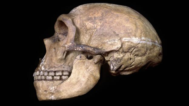 Image of: Chimpanzee What Neanderthals Healthy Teeth Tell Us About Their Minds Bbccom Bbc Earth What Neanderthals Healthy Teeth Tell Us About Their Minds