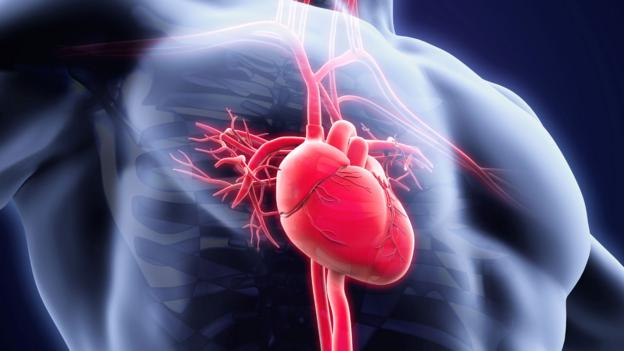 Bbc Future The Incredible Things We Know About Your Heart And Blood
