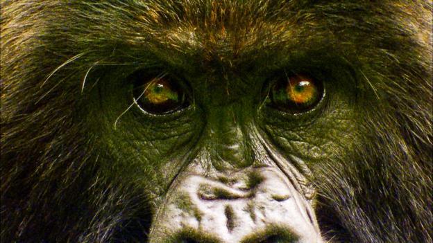 earth story gorilla seduction