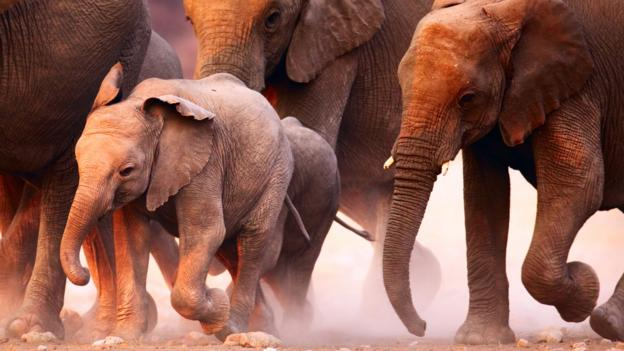 Bbc Earth The Country With Too Many Elephants