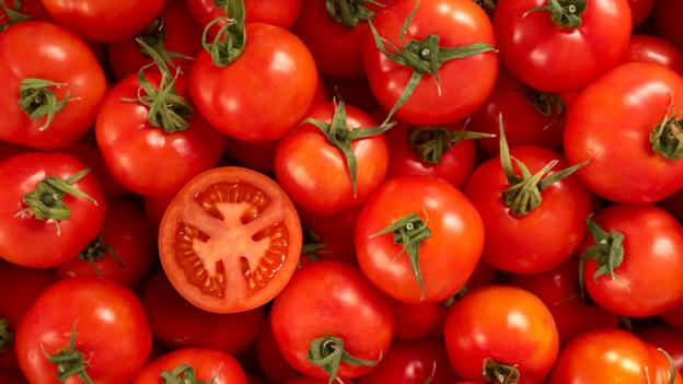 Why a German lab is growing tomatoes in urine