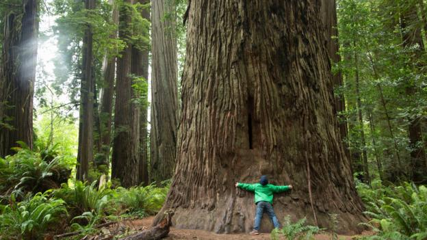 Bbc Culture What Trees Teach Us About Life And Happiness