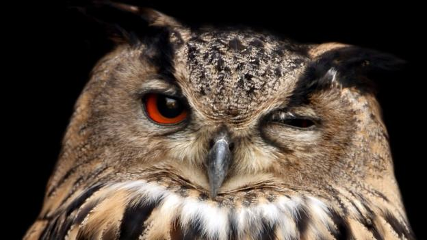 lark or owl Permission to use this questionnaire was kindly provided by author fiona johnson at wwwshiftworkconz 1 lark or owl questionnaire • make sure that you read each question carefully before answering.