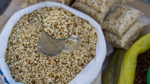 BBC - Travel - Mongolia's obsession with pine nuts