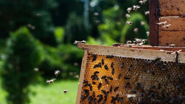 BBC - Travel - Are Lithuanians obsessed with bees?