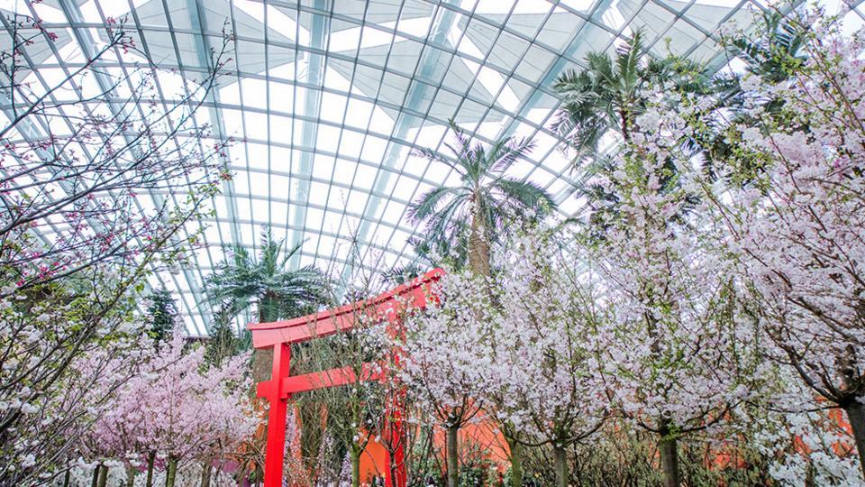 GBB-Gardens-cherry-blossoms