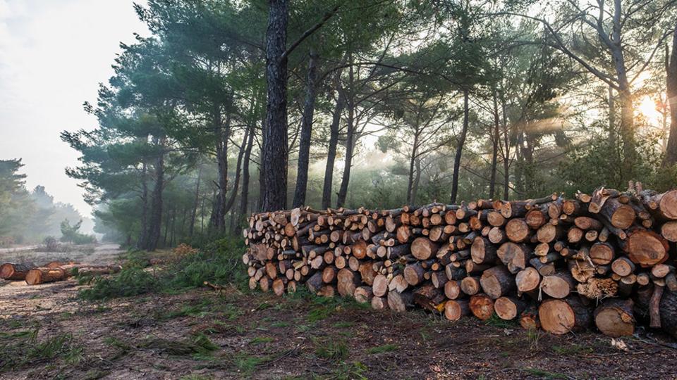 GBB-cloud-forest-logging.jpg