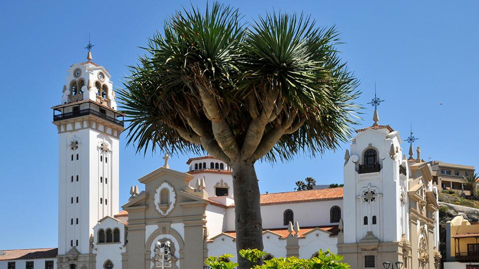 Dracaena draco in front of Basilica of Candelaria in Tenerife, Canary Islands