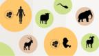 Click on the link below to explore which animals have been cloned and when