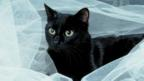 Black cat (Copyright: Thinkstock)