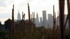 View from Brooklyn Grange farm, in New York - picture used through Creative Commons Flickr
