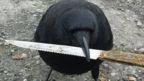 bird with a knife