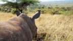 Kenya, rhino, wildlife, Lewa Wildlife Conservancy