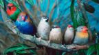 Wild birds and pet birds can be equally colourful (Credit: Reinhard/ARCO/naturepl.com)
