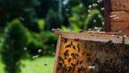 Lithuania, bee, beekeeping