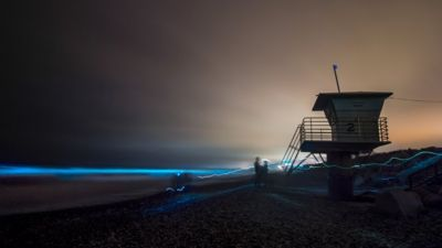 In pictures: California's neon blue tide