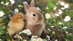 Quizzes by Type: Animals & Nature - CBBC - BBC