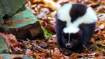 Autumnwatch on CBBC - Quiz: Which New England animal are you?
